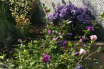 20160928-0016_jardin