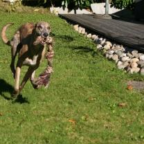 ... und durch den Garten sprinten, wenn man Lust hat!!!