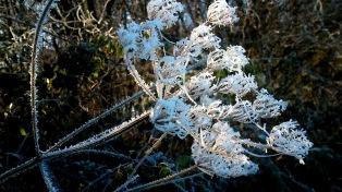 So, wie ich den Winter mag: Trocken und eiskalt - fehlt nur noch der Schnee!!!