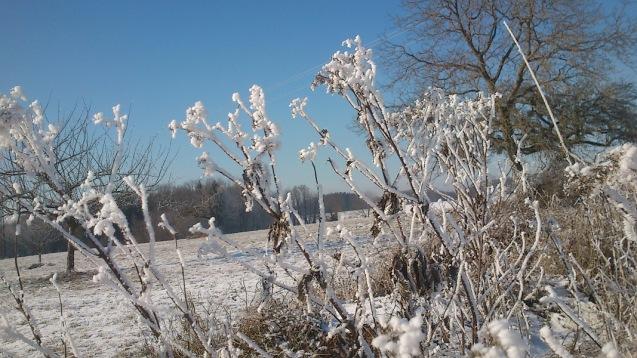 20170107-erste_winterspuren-natur-10