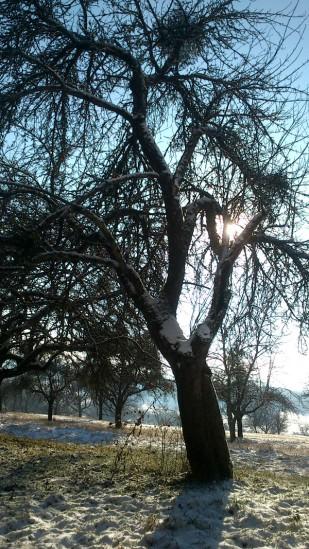 20170107-erste_winterspuren-natur-18