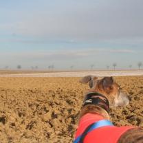 """Evita """"scannt"""" die Landschaft... rechts..."""