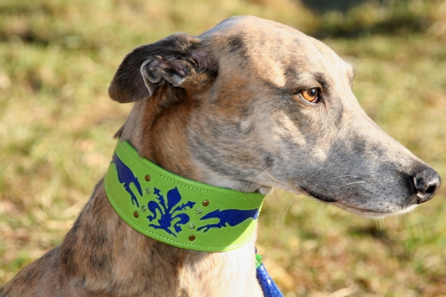 p20170225-0024_florentinesighthounds-18_evita