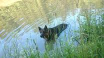 Filou nimmt ein genüßliches Bad