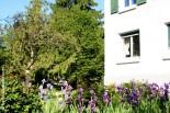 p20170517-0029_Fleurs_des_Lys_Maison-Jardin