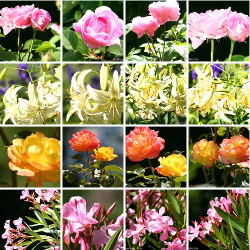 FeaturedImage_Sommergarten