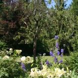 Sommergarten Ende Juni mit Lilien, Rittersport und Rosen