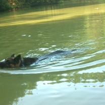 Filou unser super Schwimmer