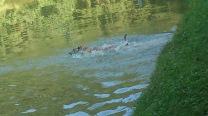 Evita schnappt im SChwimmen nach dem Tennisball ;-)