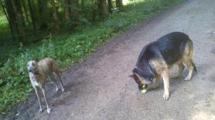 Filou nimmt seine Tennisbälle mit :-)