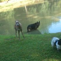 Alle drei Wasserhunde
