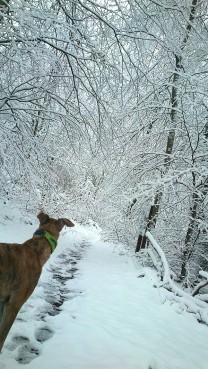20180318-Winter_fast_Ostern-Promenade-02