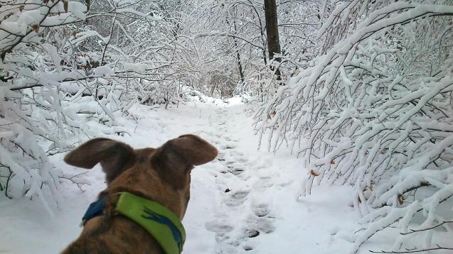 20180318-Winter_fast_Ostern-Promenade-03