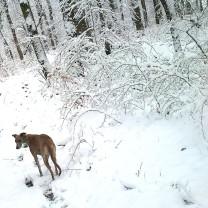 20180318-Winter_fast_Ostern-Promenade-04