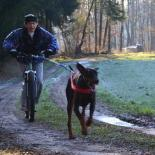 DOGscooter 2007