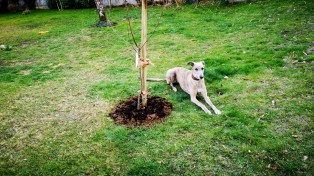 20190321-ida_apfelbaum-einpflanz-aktion
