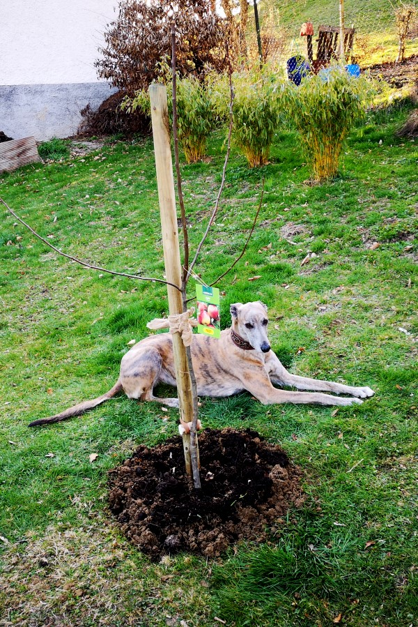 20190321-ida_apfelbaum-einpflanz-aktion_evita_et_ida