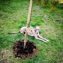 20190321-ida_apfelbaum-einpflanz-aktion_evita_garde_IN
