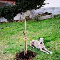 20190321-ida_apfelbaum-einpflanz-aktion_regarde_au_voisins