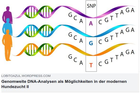 LOBITOAZUL_GenomweiteDNA-Analysen