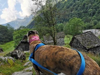 Wanderung im Verzascatal