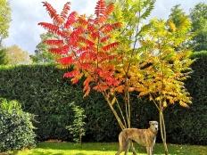 Evita beim herrlich bunten Essigbaum.