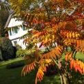 Ma Maison des Lys hinter dem Essigbaum.