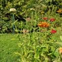 Le jardin «sauvage» oder die «wilde» Gartenseite