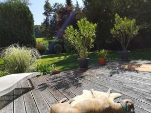 Bootssteg: Evita genießt die letzten wärmenden Sonnenstrahlen.