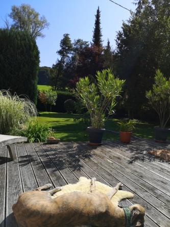 Bootssteg: Evita relaxed in der Sonne.