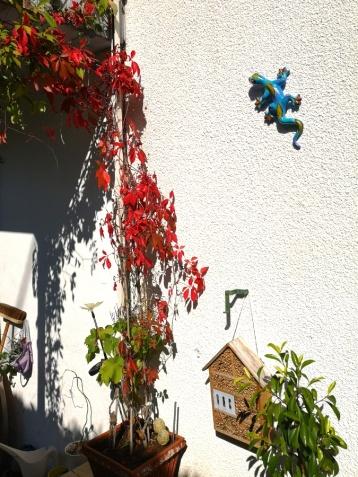 Terrasse: Hauswand mit Gekko und rotem Rebenlaub.