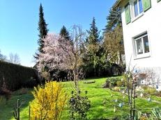 20200318-Jardin_Maison_des_Lys