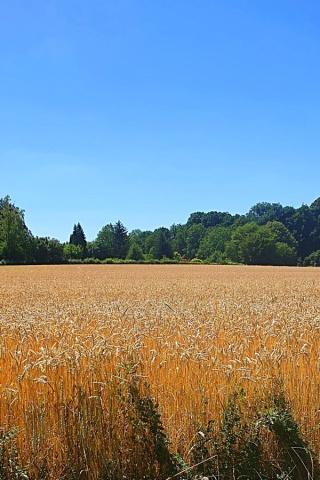 20200707-Gaby_Allschwil_Landscape-2